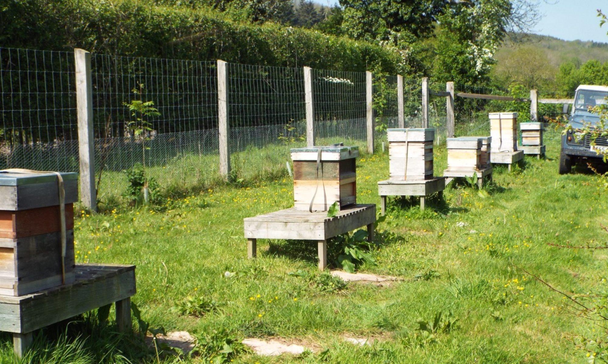 The Black  Bee Honey Company